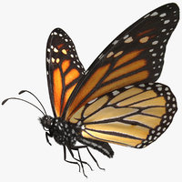 Monarch Butterfly Rigged