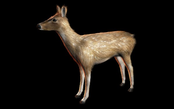 deer fur animal model