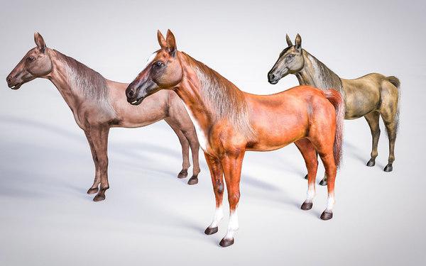 hairs horses 3D model