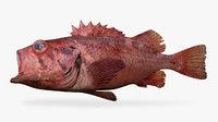 blackspotted rockfish 3D model