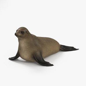 brown fur seal model