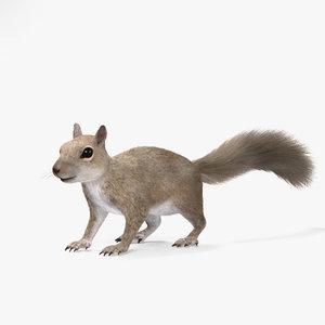 squirrel squir 3D