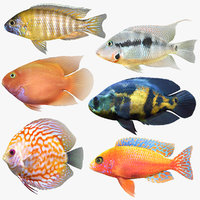 cichlids fish 3D model