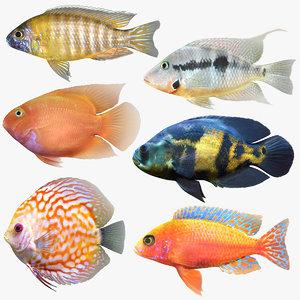 cichlids fish 3D model