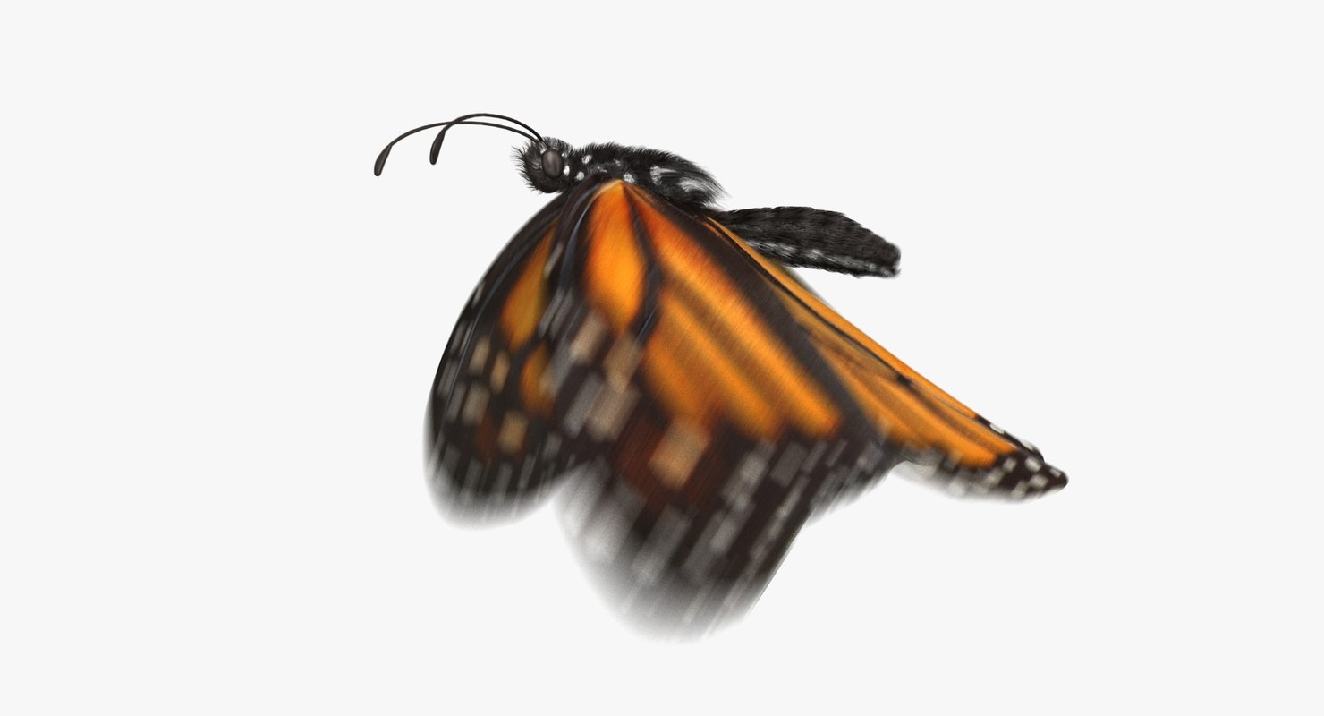 Monarch Butterfly (Animated)