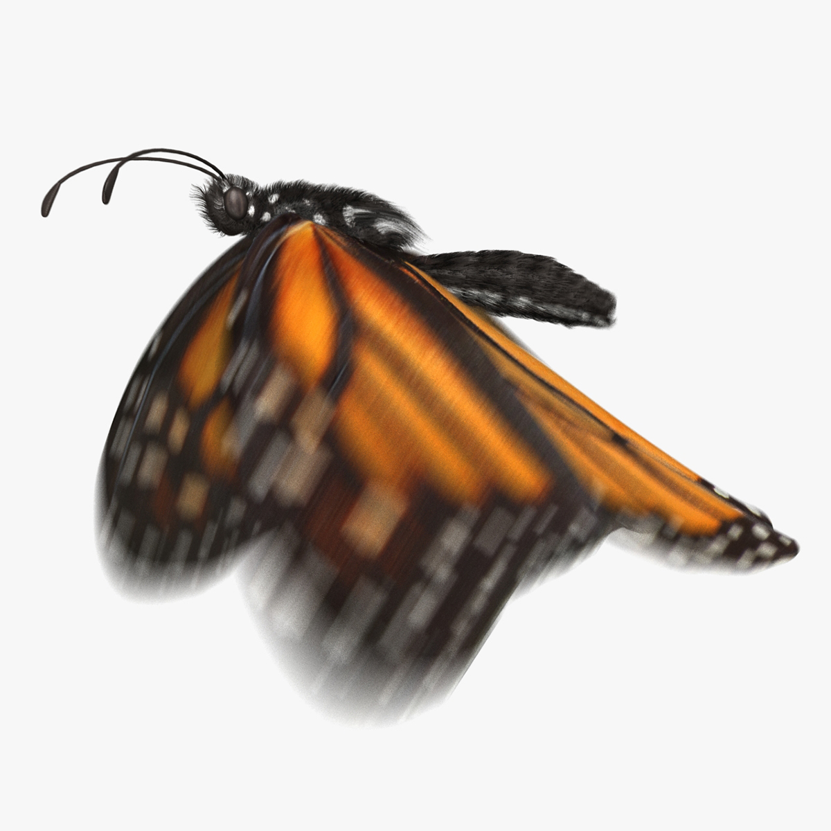 monarch butterfly animation flying model