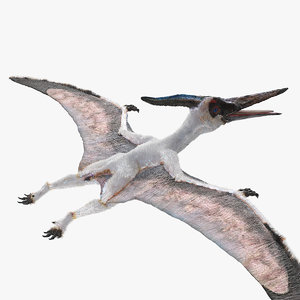 pterosaur pteranodon white fur 3D model