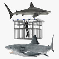 shark cage diving rigged 3D