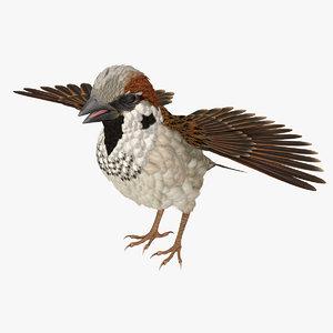 3D model sparrow t pose