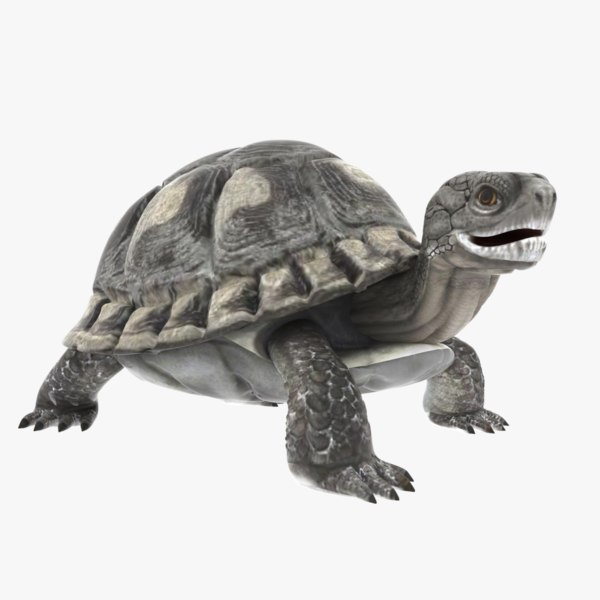 tortoise rigged animation model