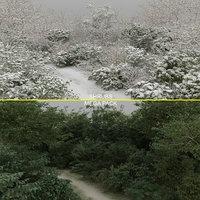 3D shrubs 100