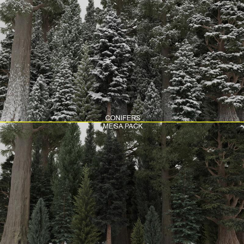 conifer cypress trees 40 3D model