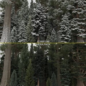 conifer cypress trees 40 3D model