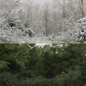 100 trees 3d max