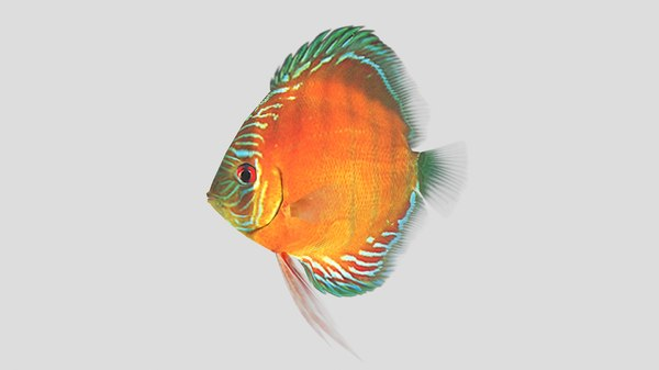 alenquer discus fish 3D model