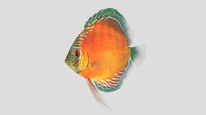 alenquer discus fish 3D model