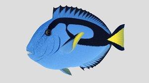 3D blue tang tropical fish