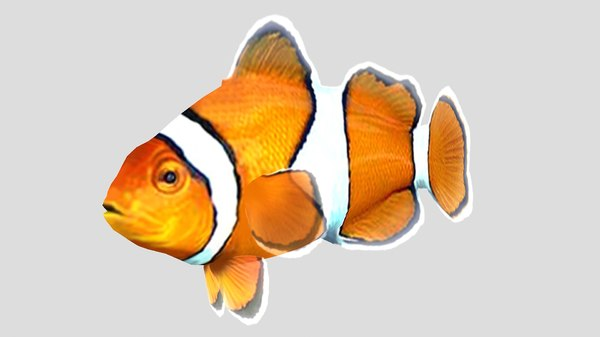 3D clownfish tropical fish
