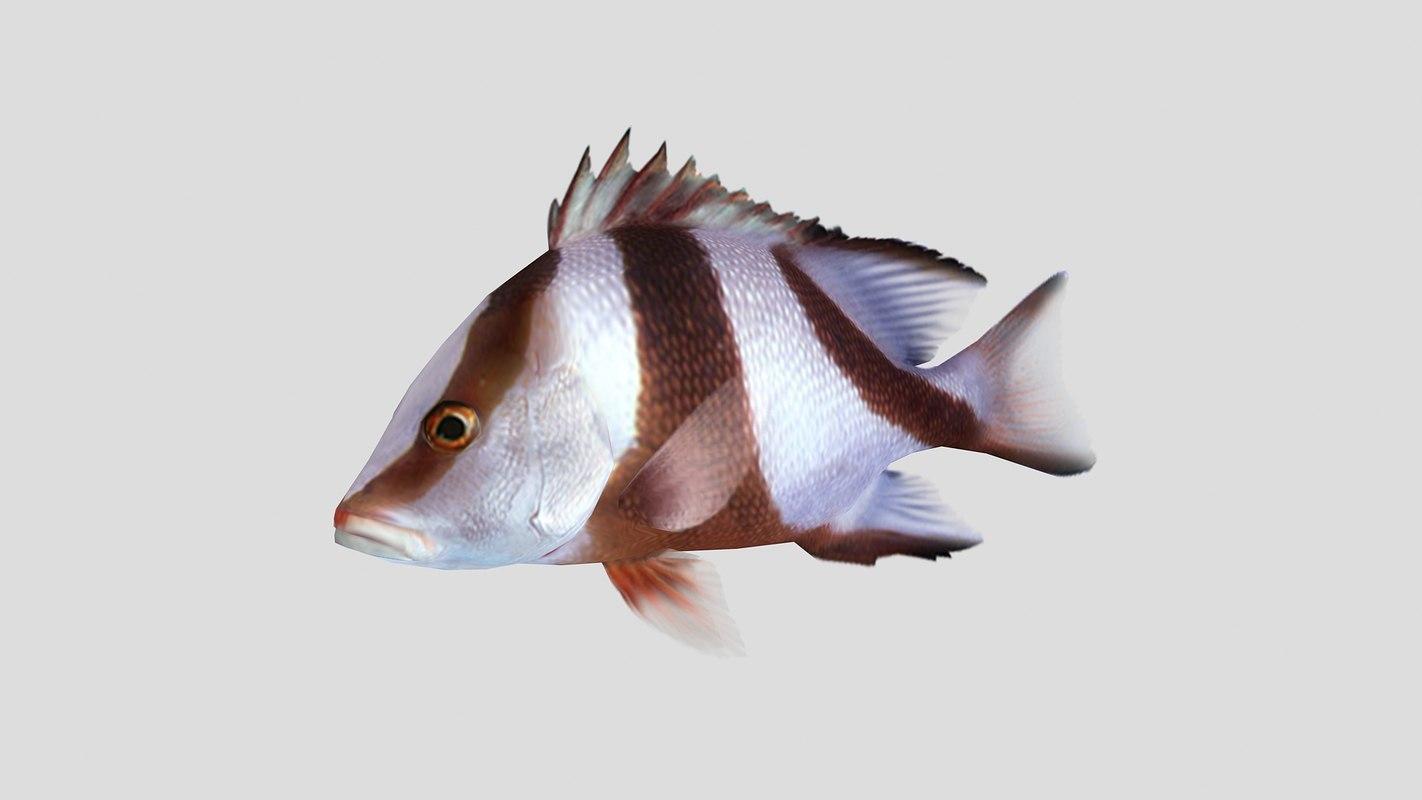 emperor red snapper fish 3D