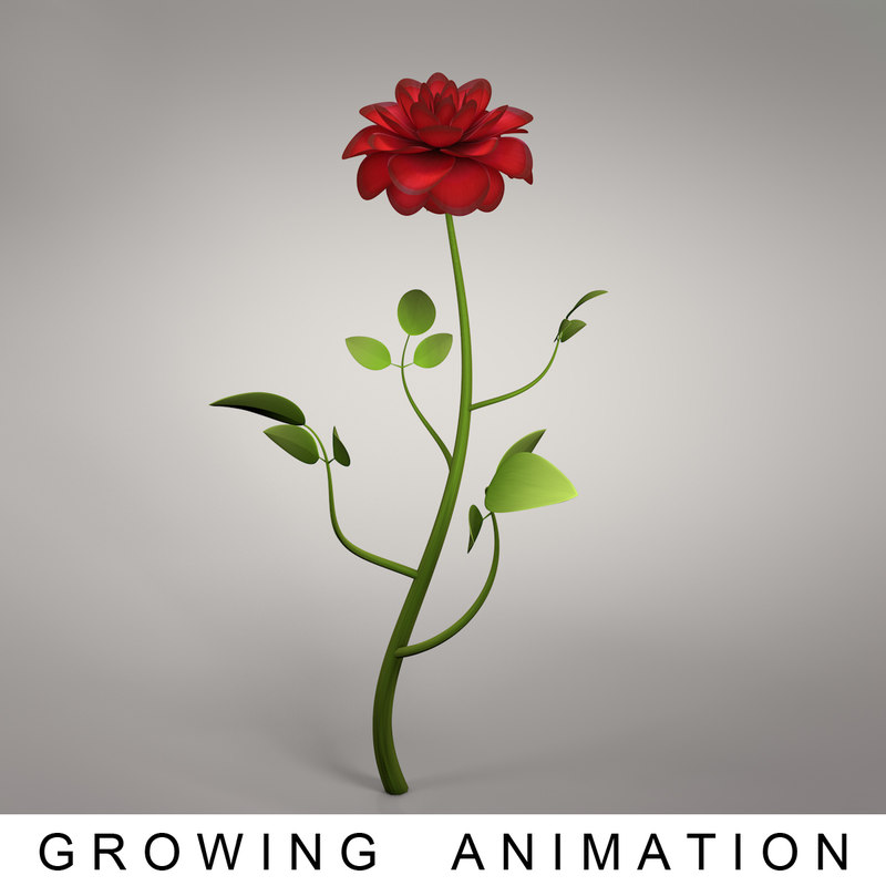 rose growing 3D