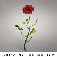 rose growing 3D