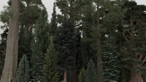 3D model conifer trees 40 summer