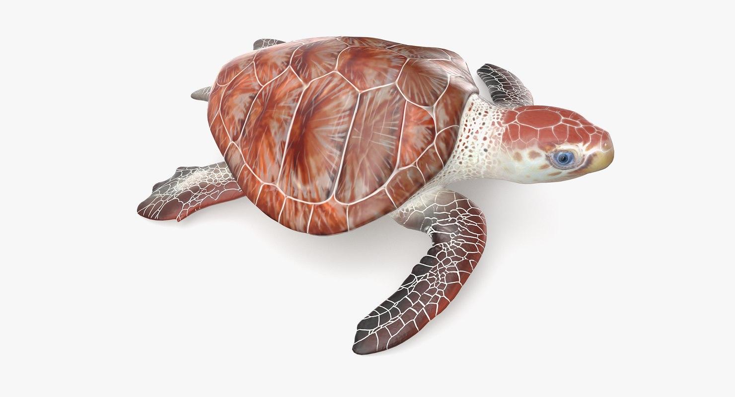 loggerhead sea turtle model