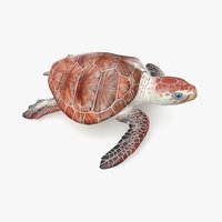 loggerhead sea turtle model
