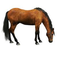 3D realistic horse
