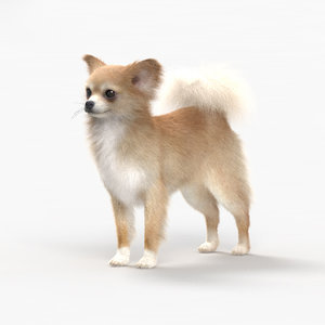 3D dog chihuahua animal