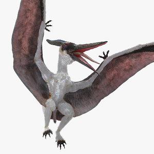3D pterosaur pteranodon white fur model