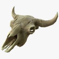 3D cow skull