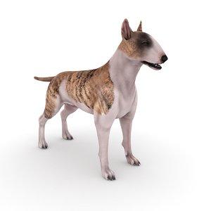 3D bull terrier dog -