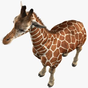 realistic giraffe fur model