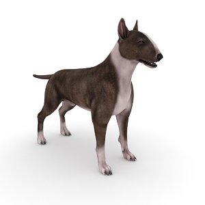 bull terrier dog - model