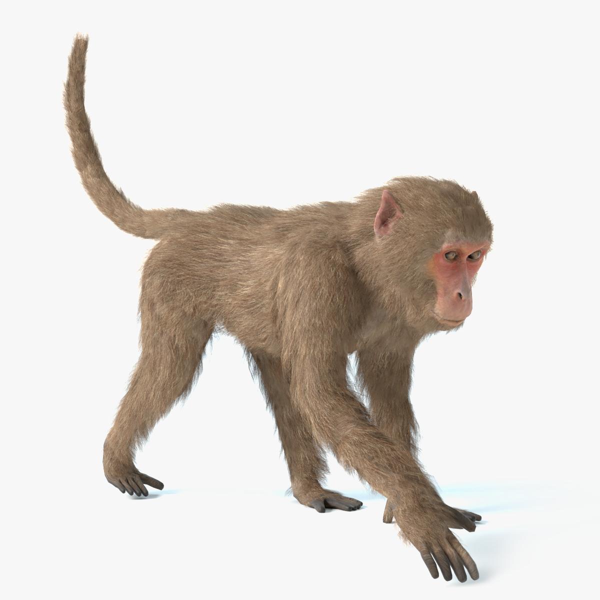 3D monkey animations