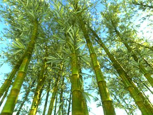 3D bamboo forest pack 10