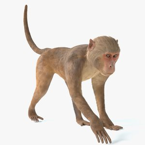 3D monkey animations 2 model