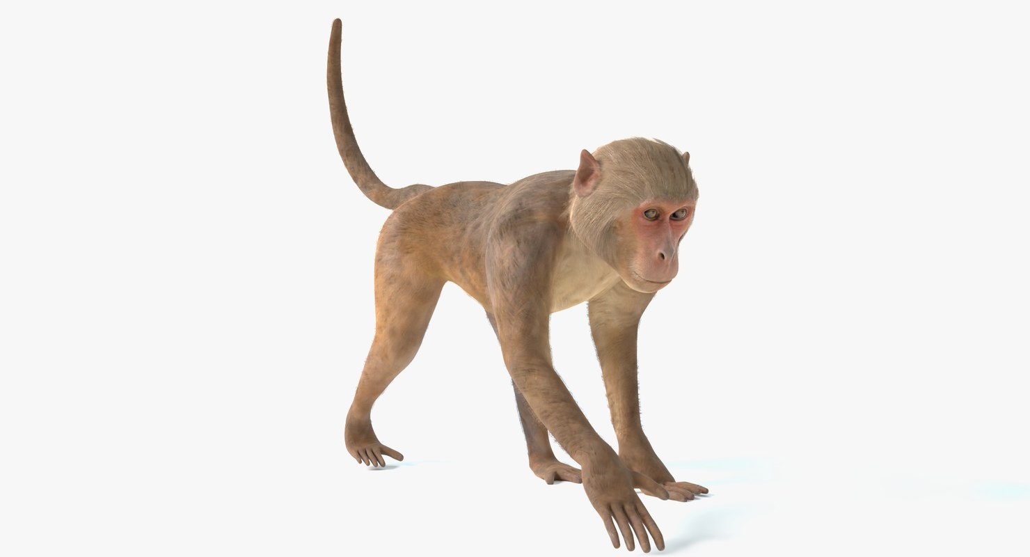 3D monkey animations 2 model