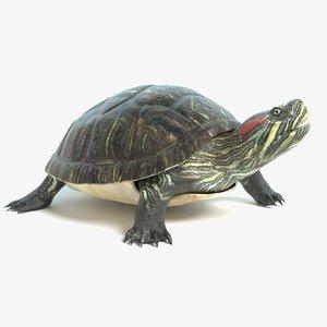 turtle animations model