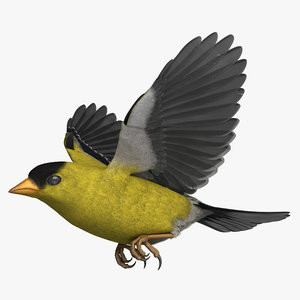rigged american goldfinch 3D model