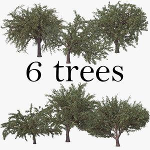 cherry summer pack tree 3D model