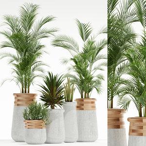 3D indigenus soma plant model
