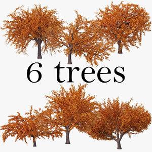 3D cherry autumn pack tree
