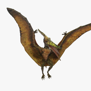 3D pteranodon flying carnivorous reptile