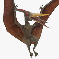 pteranodon landing pose 3D model