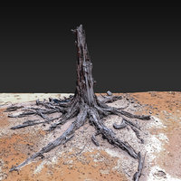 Desert Tree standing 04 3D Scan 3D model