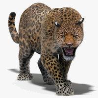 3d leopard fur cat animation