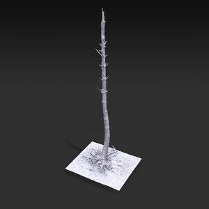 3D desert tree standing 09 model