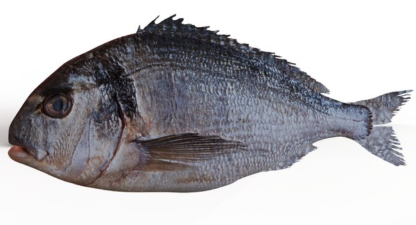 realistic fish animate 3D